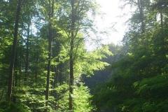 013-papuk-kapac-javor-biciklisticka-ruta