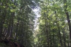 012-papuk-mrezarski-rust-biciklisticka-ruta