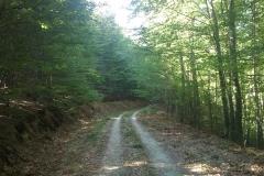 005-krndija-petrov-vrh-biciklisticka-ruta