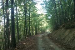 006-krndija-petrov-vrh-biciklisticka-ruta
