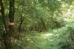 018-drenovac-trisnjica-jankovac-biciklisticka-ruta