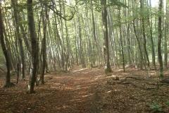 020-drenovac-trisnjica-jankovac-biciklisticka-ruta