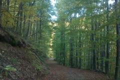 004-drenovac-uviraljka-greben-sokolina-biciklisticka-ruta