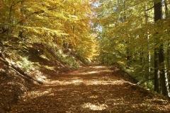 005-drenovac-uviraljka-greben-sokolina-biciklisticka-ruta