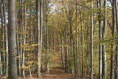 013-drenovac-uviraljka-greben-sokolina-biciklisticka-ruta