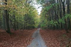 013-daruvar-petrov-vrh-biciklisticka-ruta