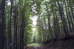 04-moticina-staklana-biciklisticka-ruta