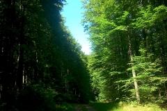 2-papuk-3-vrha-biciklisticka-ruta