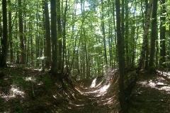 8-papuk-3-vrha-biciklisticka-ruta