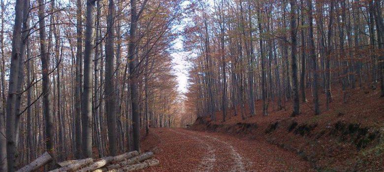 Biciklistička ruta: Kutjevo