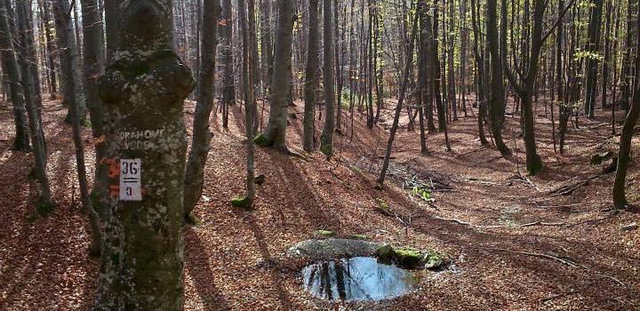 Biciklistička ruta: Drenovac - Ivačka Glava - Orahove Vode - Mališćak - Velika - Jankovac