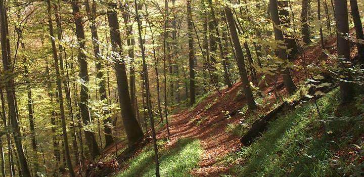 Biciklistička ruta: Drenovac - Greben Sokolina